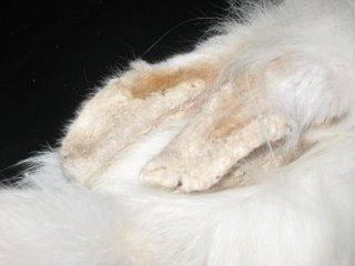 scabies-kaki
