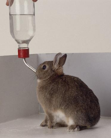 kelinci-butuh-minum