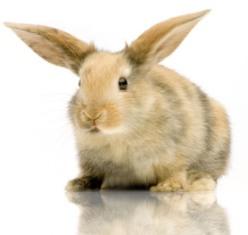 rabbit-illness