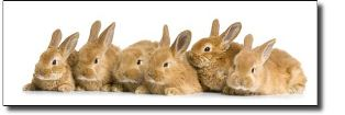 rabbits_4_small